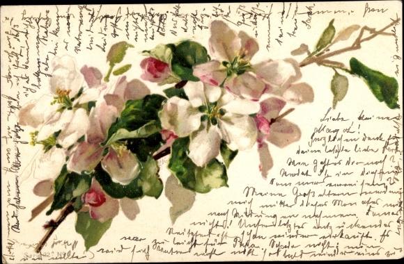 Litho Zweig mit weißen Blüten