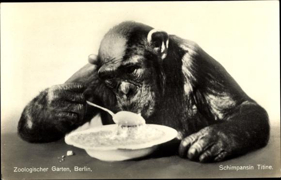 Ak Zoologischer Garten Berlin, Schimpansin Titine isst mit Löffel