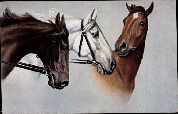 Künstler Ak Drei Pferde, Kopfstudien
