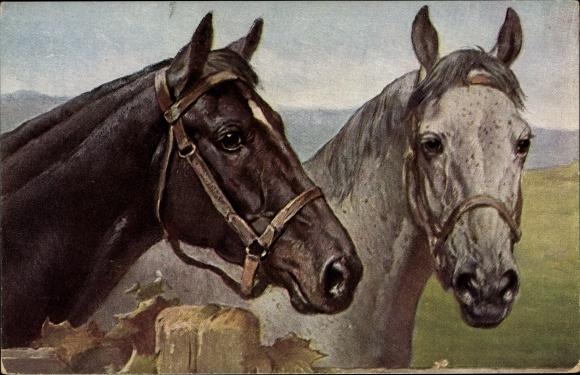 Künstler Ak Zwei Pferde, Kopfstudien