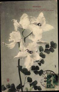 Ak Orchidée, Cette tres Rare fleur vous dira