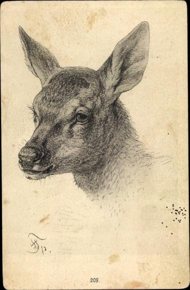 Künstler Ak Junges Reh, Tierportrait, Rehkitz