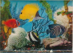 3 D Ak Verschiedenfarbige Fische im Aquarium, Steine, Korallen, Wasserpflanzen
