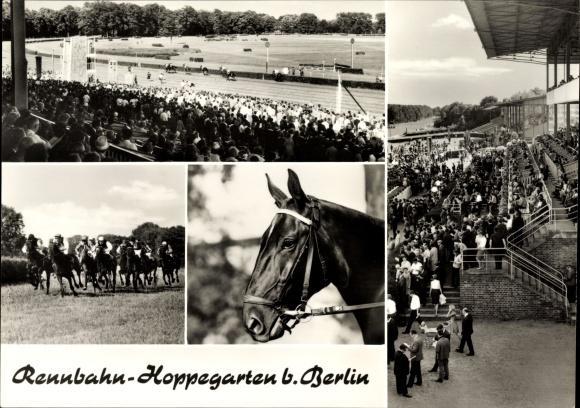 Ak Hoppegarten, Pferderennbahn, Teilansichten, Pferd