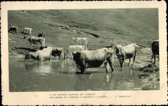 Ak Rinder, Trinken am Ufer, Almpartie