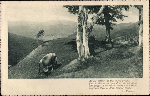Ak Grasendes Rind auf einem Gipfel, Hirte unter Baum, Panorama