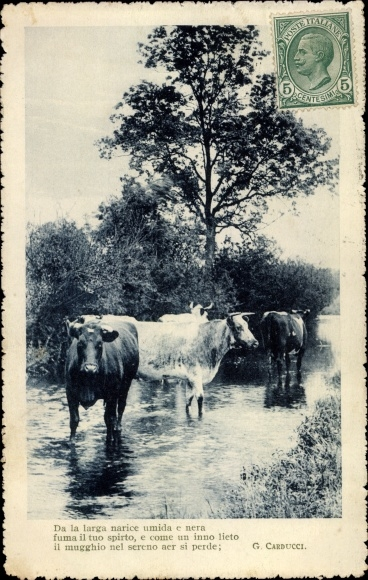 Ak Rinder im Wasser stehend, Baum, Gebüsch