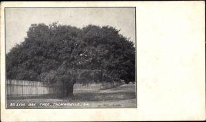 Ak Thomasville Georgia USA, Live Oak Tree