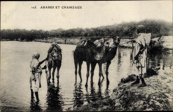 Ak Arabes et Chameaux, Araber, Kamele
