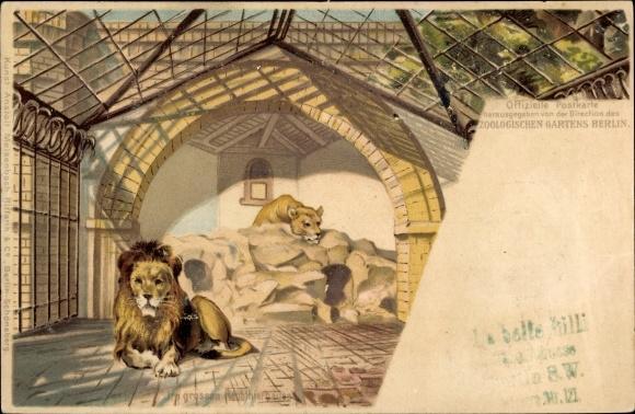 Litho Berlin Tiergarten, Löwen im Zoologischen Garten, Raubtierhaus