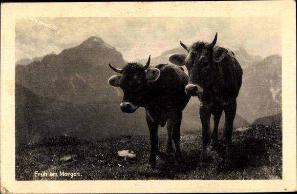Ak Früh am Morgen, Kühe auf der Alm