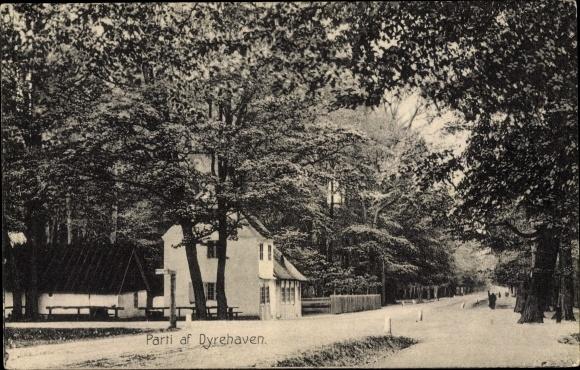 Ak Dyrehaven Dänemark, Straßenpartie im Ort, Bäume