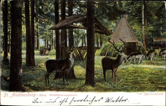 Ak St. Andreasberg Braunlage im Harz, Partie an der Wildfütterungsstelle, Hirsche