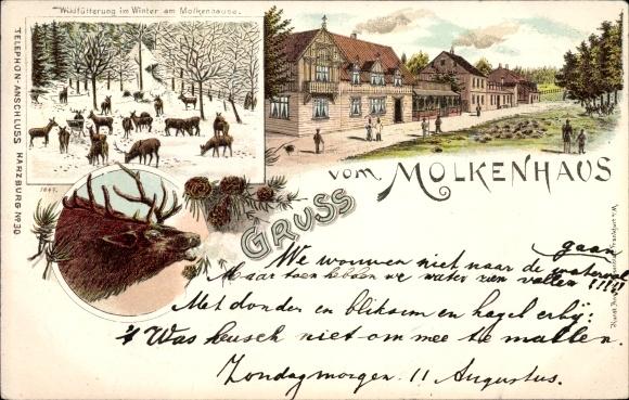 Litho Bad Harzburg in Niedersachsen, Molkenhaus, Wildfütterung im Winter, Hirsch