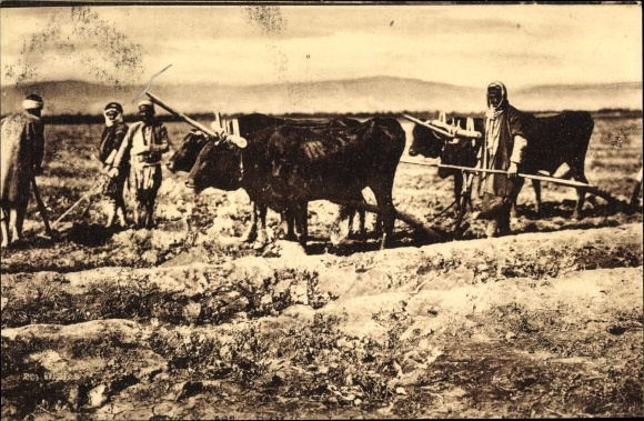 Ak Libanon, Bauern mit Ochsenpflug auf dem Feld, Araber