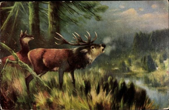 Künstler Ak Röhrender Hirsch und Hirschkuh im Wald