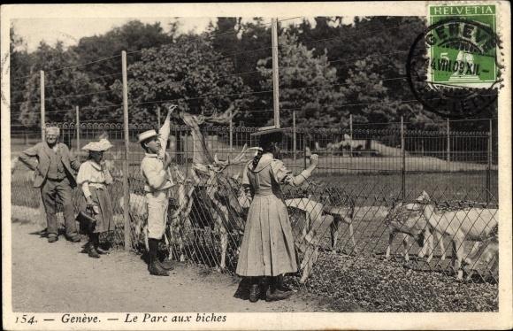 Ak Genève Genf Stadt, Le Parc aux biches, Wildgehege im Tierpark, Hirsche
