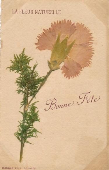 Material Ak Glückwunsch Geburtstag, La Fleur Naturelle, getrocknete Nelke 0