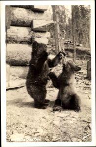 Foto Ak Alaska USA, Zwei Jungbären beim Spielen, Grizzlies