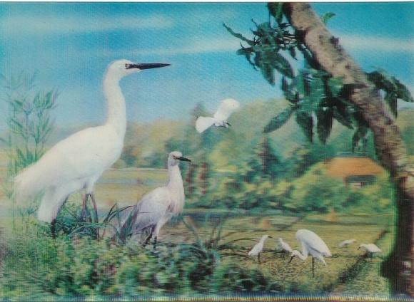 3-D Ak Kraniche im Freien, Weißes Gefieder, Fliegende Vögel, Heron