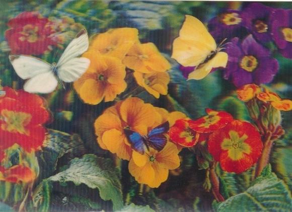 3-D Ak Primula and Butterfly, Primeln, Schmetterlinge
