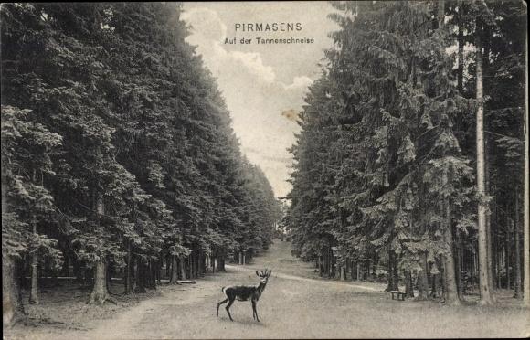 Ak Pirmasens am Pfälzerwald, Auf der Tannenschneise, Reh