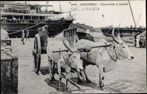 Ak Colombo Ceylon Sri Lanka, Charrette a boeufs