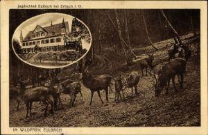 Ak Eulbach Michelstadt Odenwald, Hirsche im Wildpark, Jagdschloss