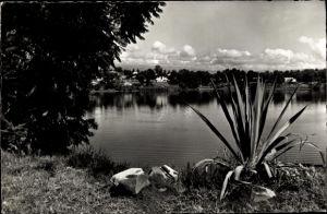Ak DR Kongo Zaire, Vue sur Lac Kivu, Aloe Vera