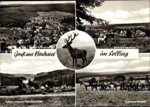 Ak Neuhaus Holzminden im Weserbergland, Blick auf den Ort, Hirsch, Trakhener Gestüt