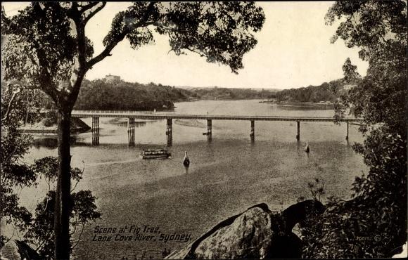 Ak Sydney Australien, Scene at Fig Tree, Lane Cove River
