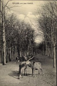 Ak Harz, Hirsche, Waldpartie