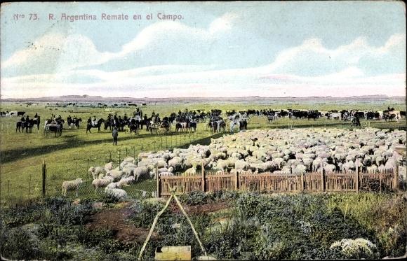Ak Argentinien, Remate en el campo, Schafe auf einem Feld