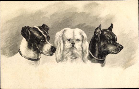 Künstler Ak Drei Hunde, Kopfstudien, Hundeportrait
