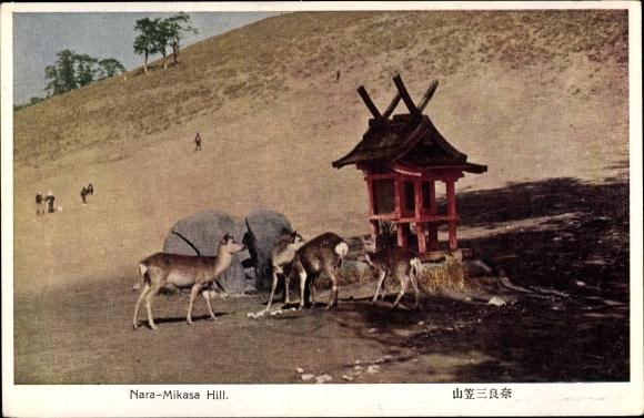 Ak Nara Präf. Nara Japan, Nara Mikasa Hill, Rehfütterung