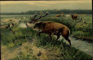 Künstler Ak Hirsch, Rehe, Röhren, Uferpartie