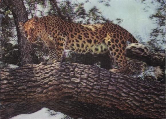 3-D Ak Leopard auf einem Baum, Raubkatze