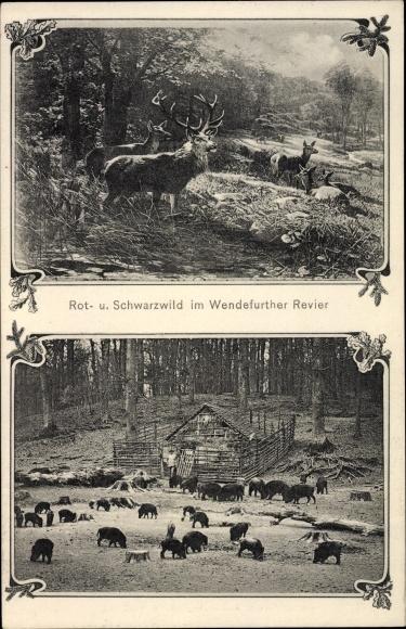 Ak Wendefurth Thale im Harz, Rotwild und Schwarzwild im Wendefurther Revier, Hirsche, Wildschweine