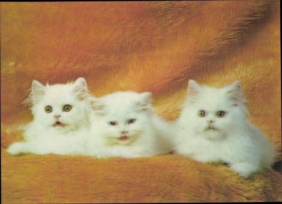 3-D Ak Drei Hauskatzen, Katzenportrait