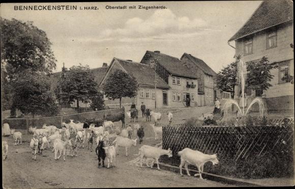 Ak Benneckenstein Oberharz am Brocken, Oberstadt mit Ziegenherde, Wohnhäuser