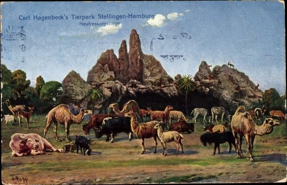 Ak Hamburg Eimsbüttel Stellingen, Carl Hagenbecks Tierpark, Heufressergehege, Kamele, Lamas, Zebras