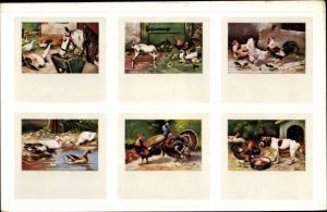 Künstler Ak Tiere auf dem Bauernhof, Pferd, Ziege, Hahn, Hühner, Enten, Truthahn, Bulldogge