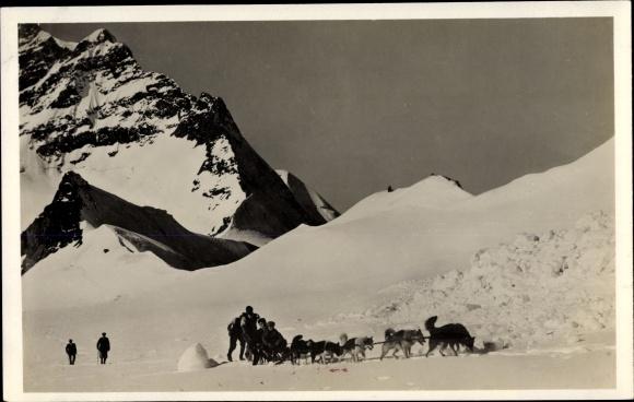 Ak Kanton Bern, Eskimohunde auf dem Jungfraufirn, Schlittenhunde