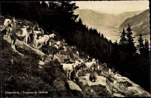Ak Schweiz, Ziegenherde, Troupeau de Chèvres