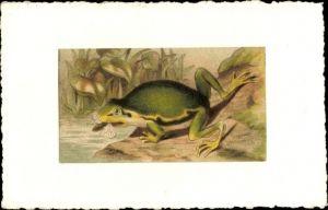 Künstler Ak Frosch am Ufer, Verspeisung einer Fliege