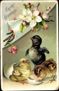 Präge Ak Glückwunsch Ostern, Küken schlüpfen aus Osterei, Kirschblüte, Tuck 700