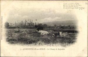 Ak Corneville sur Risle Eure, Le Champ de Serpolette, des Vaches