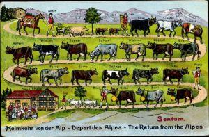 Präge Ak Viehtrieb, Rinder, Ziegen, Heimkehr von der Alp zum Bauernhaus, Sentum, Kuhglocken