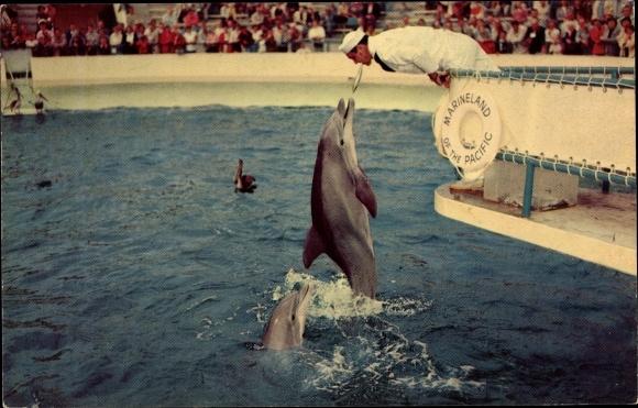 Ak Zippy Delfin im Marineland of the Pacific, Palos Verdes Kalifornien, Kunststückchen