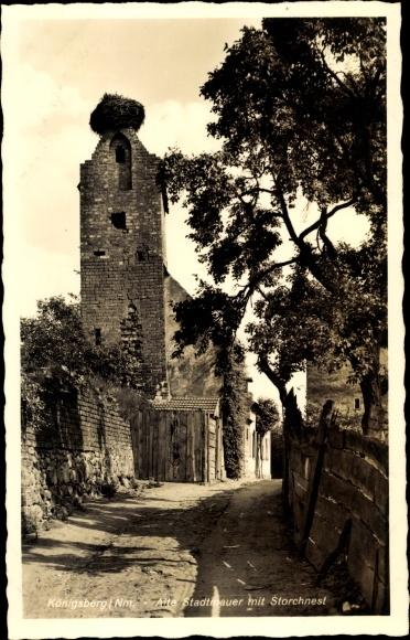 Ak Chojna Königsberg Neumark Ostbrandenburg, Alte Stadtmauer mit Storchnest